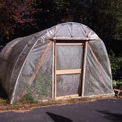 "This time of year, our homemade hoop house really earns its keep.   Our temperatures at night have been dipping into the 30s, but this little unheated structure is keeping the last of our tomato plants and herbs from freezing. It looks like we have a few • <a style=""font-size:0.8em;"" href=""http://www.flickr.com/photos/54958436@N05/21902426478/"" target=""_blank"">View on Flickr</a>"