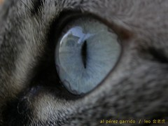 zrq ojos 3 (al perez / leo.jinlaohu) Tags: pet reflection eye animal cat pose ojo reflected gato reflejo beast    mascota reflexin    posar      zrq