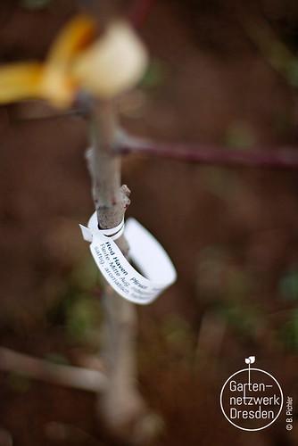 anpflanzen_45