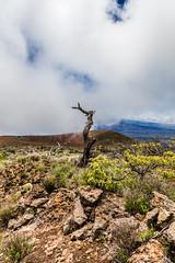 Mauna Kea Trip, Big Island - 24 (www.bazpics.com) Tags: trip usa mountain tree america landscape island volcano hawaii lava drive us big scenery unitedstates cone hill extreme dramatic ash hi hilo volcanoes hillside cones cinder