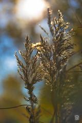 2015-11-01_Q8B3924 © Sylvain Collet.jpg (sylvain.collet) Tags: autumn france nature automne sur marne vairessurmarne vaires