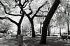 Union Square (aaronvandorn) Tags: park newyorkcity infrared unionsquare ilfordsfx minoltasrt202 rokkor58mmf14 720nmirfilter