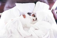 Bum (ditakespictures) Tags: california travel summer dog saint bernard roadtrip pch highway1 pacificcoasthighway vsco