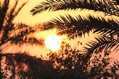 IMG_5327 (Amro Afifi) Tags: sunset orange sun wow great romantic charming stuning