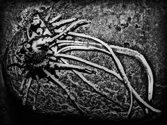 The mysterious creature of potato planet (Ignacio M. Jimnez) Tags: patata potato brote bud bw bn byn macromondays mysterious ignaciomjimnez