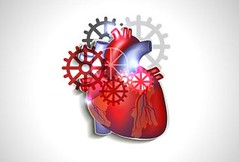 31486206 - heart with gears, human heart anatomy (mghresearchinstitute) Tags: anatomy atherosclerosis attack beat body cardiology care graphic health healthy heart heartbeat human infarct medical medicine normal organ anatomical illustration doctor cardiologist disease ill sick aid design cardiovascular rhythm coronary artery poster diagram chart circulatory system physiology surgery surgical cardiogram banner gear gears motor engine wheels implant implantation abstract treat treatment cure red artificial