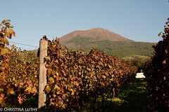 untitled (christinaluthy) Tags: italy europe volcano mountvesuvius olive winebarrel wine grapes vineyard vesuvio grapevine