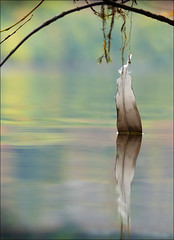 Saint Herbert's Island (McRusty) Tags: goose feather caught twig branch reflection autumn tree colour colours still water derwent saint herberts island lake district england united kingdom
