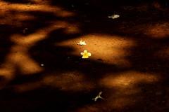 ~light n shadow~ (~~ASIF~~) Tags: canon60d outdoor alone light shadow dark sunlight serene