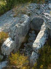 Dolmen dit Peyro Lebado (AJ Mitchell) Tags: neolithic bronzeage prehistoric tumulus dolmen megalith rural field tree neoltico nolithique