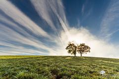L'explosion (photosenvrac) Tags: paysage arbre jura lumiere ciel nuage thierryduchamp
