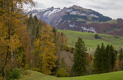 Autum in the Appenzell Region (hdzimmermann) Tags: herbst autumn herbstlaub leaves trees bume wald wiese lawn gras mountains berge alpstein alpen alps sntis outdoor landscape landschaft appenzellerland wandern hiking