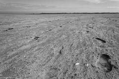 Schiermonnikoog | 2016 (www.rguezruiz.wordpress.com) Tags: isla groningen erasmus netherlands pases bajos schiermonnikoog island dutch cielo amanecer concha conchas playa arena agua mar nubes bonito paisaje rojo faro ojo de buey azul naranja contraluz