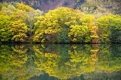 Autumn Reflection (tez-guitar) Tags: water reflection reflections pond autumn autum autumn leaf leaves tree trees wood forest highland japan