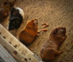 Picures en el Zoolgico (MariaTere-7) Tags: animales picures zoolgico el pinar caracas venezuela maratere7