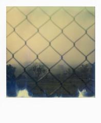 Homeland (La T / Tiziana Nanni) Tags: tizianananni sx70 polaroid polaroidsx70 analogico analogue landscape impossible