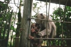 P1050193-Edit (F A C E B O O K . C O M / S O L E P H O T O) Tags: bali ubud tabanan villakeong warung indonesia jimbaran friendcation