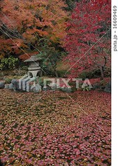 16609469 (finalistJPN) Tags: autumnleaves japanesegarden colors kyoto fall worldheritage discoverjapan japanguide visitjapan discoverychannel nationalgeographic stockphotos availablenow