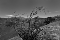 Views of Ubehebe Crater While Walking Along the Rim (Black & White, Death Valley National Park) (thor_mark ) Tags: atubehebecrater blackwhite blueskieswithclouds capturenx2edited colorefexpro craterrim creosotebush day4 deathvalleynationalpark desertlandscape lookingsouth mountains mountainsindistance mountainsoffindistance nature nikond800e portfolio project365 triptodeathvalleyandcalifornia ubehebecrater volcaniccrater volcanicpast california unitedstates