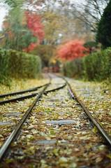 가을은 왜 이렇게 빨리 지나갈까 (whoevercomes) Tags: film 35mm dop depthoffield fall autumn leav es leaves zenit пленка 필름 가을 analog