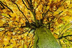 Herbstfarben (p.schmal) Tags: olympuspenepl7 hamburg farmsenberne bernerau herbst