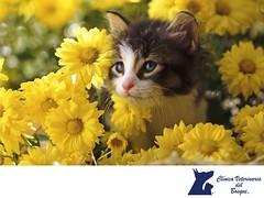 Las flores de Bach. CLINICA VETERINARIA DEL BOSQUE 1 (tipsparamascotas) Tags: veterinariadelbosqueveterinariacuidadodemascotasmascotassaludablesesteticacaninaclinicaveterinariadelbosqueespecialistasencuidadodemascotaswwwveterinariadelbosquecomveterinariadelbosque veterinaria cuidadodemascotas mascotas mascotassaludables estticacanina delbosque