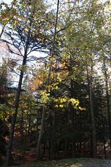 Troodos Geopark (37) (Polis Poliviou) Tags: polispoliviou polis poliviou   cyprus cyprustheallyearroundisland cyprusinyourheart yearroundisland zypern republicofcyprus  cipro  chypre   chipir chipre  kipras ciprus cypr  cypern kypr  sayprus kypros polispoliviou2016 troodosgeopark troodos mediterranean nicosia valley life nature forest historical park trekking hiking winter walking pine pines prodromos limassol paphos fall autumn geopark kakopetria
