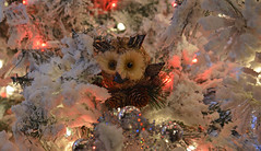 Who?? (BKHagar *Kim*) Tags: bkhagar christmas tree flock flocking owl decoration holiday bird feather pinecone