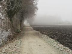 Im Isental (Waldrebe) Tags: frost nebel reif isen winter