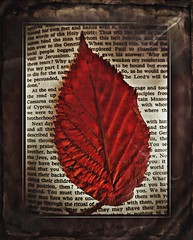 The Lord's Will (Jackal1) Tags: conceptual leaf words text creative red