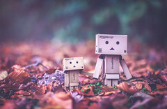 Autumn-atons. (Matt_Briston) Tags: danbo bigdanbo woods leaves autumn robot green orange walk holding hands matt cooper nikon d90