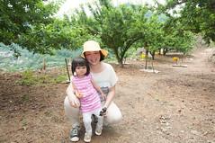 剛哭完 (Wunkai) Tags: taiantownship taiwanprovince taiwan family ziyiwang 泰安 苗栗 plumtrees 李子 李樹