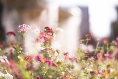 I'm home -  (tokyovisitor22) Tags: street warm sunday sunny flowers yokohama outdoor love