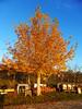 Λιμνη Πλαστηρα P1150496 (omirou56) Tags: 43ratio panasoniclumixdmctz40 δεντρο ουρανοσ δρομοσ sky street tree