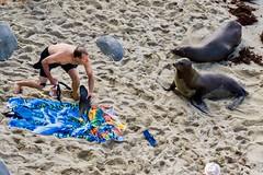 Getting Close To Nature ((Jessica)) Tags: sealion wildlife beach water sealions sandiego seal sunny summer sand california seals lajolla tourists people gettingclosetonature wow