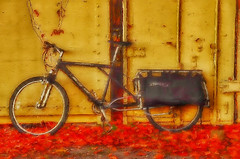 It just caught my eye... (tomk630) Tags: virginia bicycle colors morning sunrise autumn artistic usa nature
