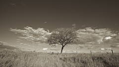 Rural scene (Francisco Arago) Tags: zonaruraldeplanaltina planaltina distritofederal brasil franciscoarago fotografia picture monochrome sepiatone fotografo ceu arvore canonlens1635mm canon5dmkii brazil centrooeste planaltocentral df sky tree nuvens clouds paisagem paisagemrural zonarural