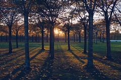 Sunset through the trees (tanjatiziana) Tags: copenhagen denmark kastellet trees sunset shadows warmth