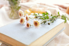 Chrysanthemum flowers and books on the table (victoria.kondysenko) Tags: tea table temptation floral dessert chrysanthemum white spring sweet beverage flower drink life lay cup breakfast teatime blossom traditional cozy crockery time lifestyle retro still cake sugar pastry wooden vintage fresh hot book tray blanket yellow light