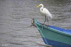 Fishing Egret (Maria Luiza S) Tags: fishing egret gara pescaria boat barco blue sea azul mar