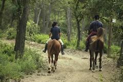 Ntx 407-30A 02 (chausson bs) Tags: cavalls caballos cavalos chevals horses horsewoman santcugatdelvalls collserola