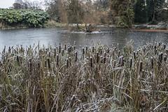 Erster Frost - 0020_Web (berni.radke) Tags: ersterfrost frost raureif wassertropfen rime eisblumen eiskristalle iceflowers icecrystals escarcha