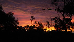 Brilliant (PR Day) Tags: sunset southaustralia clouds gumtrees