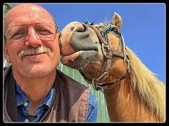Pret met Sarah (gill4kleuren - 11 ml views) Tags: horse me sarah fun lol gill saar paard haflinger