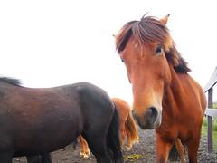 More horses!