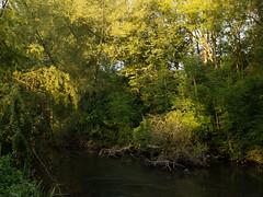20150822-GR009708-Edit (fleetingphotons) Tags: river fishing ricohgr kennet wasingestate warrenbeat midghamberkshire