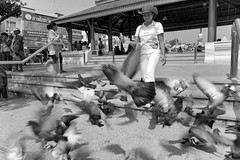 Scattering (FimRay) Tags: street blackandwhite bw motion blur bird monochrome birds pigeon pigeons flock flight monotone scatter scattering