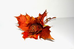 Autumn Rose (Michelle O'Connell Photography) Tags: autumn brown flower fall nature leaves rose season death gold scotland leaf october decay autumncolours mapleleaf bloom mapleleaves decompose goldenbrown roseleaves autumnrose roseleaf autumnbloom michelleoconnellphotography rosemadeofleaves