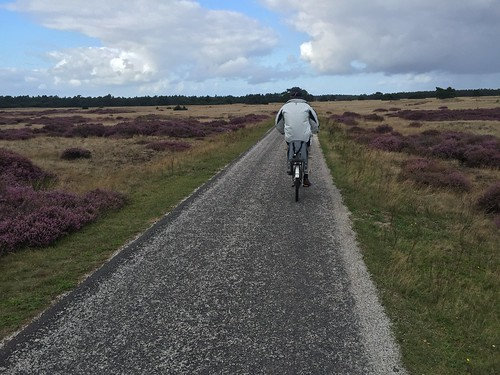 Biking around Hoge Veluwe Park