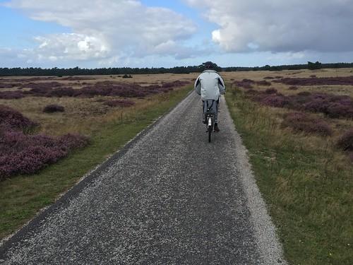 Biking around Hoge Veluwe Park
